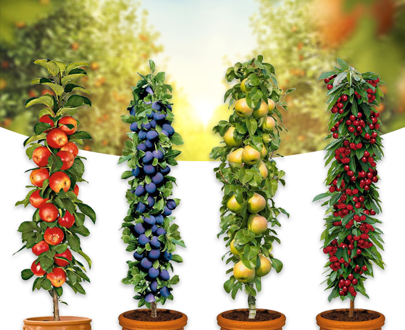 Groupdeal Fruitbomen